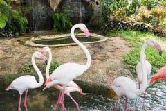 Fenicottero nello zoo thailand fotografia stock libera da diritti