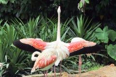 Fenicottero rosa allo zoo Fotografia Stock Libera da Diritti