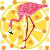 Fenicottero rosa sul fondo dell'agrume - illustrazione di vettore, ENV illustrazione vettoriale