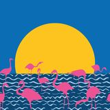 Fenicottero sul sole di seduta del mare Immagini Stock Libere da Diritti