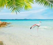 Fenicottero in una spiaggia tropicale fotografia stock libera da diritti
