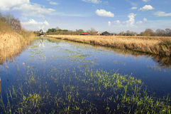 Fenland in Cambridgeshire, England. The fens in East Anglia are a marshy region, artifically drained and transformed into arable farming areas. Today in fenland Stock Image