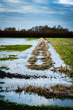 Fenland flooding and sky. Winter flooding in fenland with spectacular sky and lone tree Stock Photo