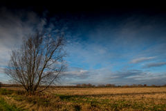 Fenland landscape and dramatic sky Stock Photos