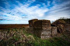 Fenland landscape in winter Royalty Free Stock Photography
