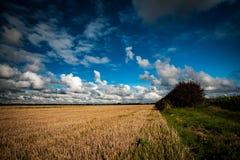Fenland landskap Arkivfoto