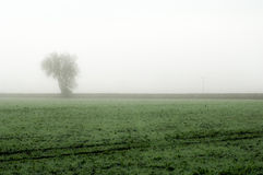 Fenland in the mist Stock Images