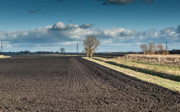 Fenland ploughed field with scattered trees Stock Image