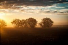 Fenland shrubs at sunrise Royalty Free Stock Photos