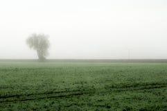 Fenland w mgle Obrazy Stock
