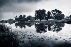 Fenland wierzby i rzeka Zdjęcia Stock