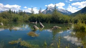 Fenlands trail banff rundle mountain. Fenlands,wet lands,mountain,summer banff reflection water stump tree water Stock Photography
