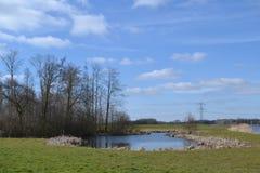 Fenn nahe Fluss Oude IJssel Stockfotografie
