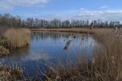 Fenn nahe Fluss Oude IJssel Stockfoto