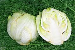 Free Fennel Royalty Free Stock Photos - 14383728