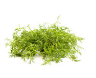 Fennel. On a white background Stock Image