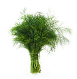 Fennel. On the white isolated background royalty free stock image