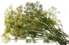 Fennel. On the white isolated background Stock Photo