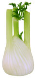 Fennel. A fresh fennel bulb isolated on white royalty free stock image