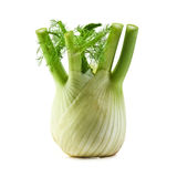 fennel Royaltyfri Foto