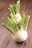 Fennel Royalty Free Stock Photo