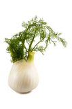 Fennel Royalty Free Stock Image
