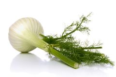 Fennel Royalty Free Stock Photography
