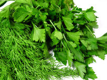 Fennel. And parsley Royalty Free Stock Photography