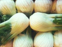 fennel Foto de Stock Royalty Free