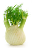 Fennel. On a white background Royalty Free Stock Photography