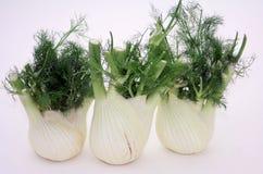 fennel Royaltyfria Bilder