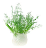Fennel. Fresh, trimmed fennel isolated on white background Royalty Free Stock Photography