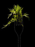 Fennel on a black background Royalty Free Stock Images