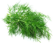 Fennel branch Stock Photography