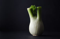 Fennel Bulb on Black Background Royalty Free Stock Image