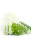Fennel bulb isolated on white background Stock Images