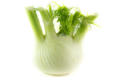 Fennel bulb isolated on white Stock Photo