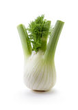 Fennel bulb with leaves. Fennel Bulb. Single fresh fennel bulb with leaves on white background royalty free stock images
