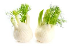 Fennel Bulb. Single fresh fennel bulb with leaves on white backg stock photos
