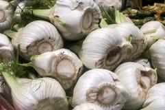 Fennel bulbs in farmers market Stock Photography