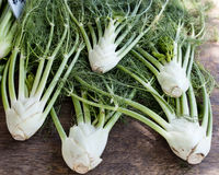 Fennel bulbs Royalty Free Stock Images