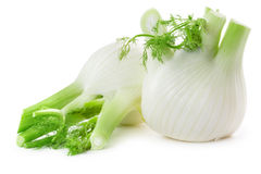 Fennel bulbs Stock Image