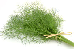 Fennel bunch. In front of white background Royalty Free Stock Photography