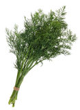 Fennel bunch Stock Photos