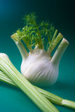Fennel and celery Stock Photography