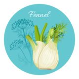 Fennel condiment green seasoning with edible root bulb-like stem. Realistic vector illustration isolated on white in blue circle, flowering plant on background Stock Photo
