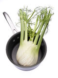 Fennel in a Cooking Pot Stock Photos