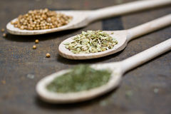 Fennel, Coriander & Dry Parsley Stock Images