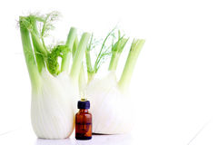 Fennel essential oil Stock Image