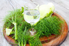 Fennel and fennel liqueur Stock Images